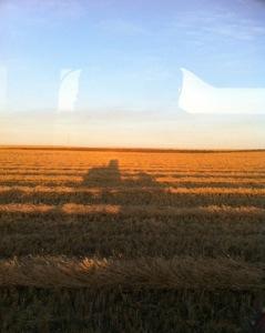 Harvest Journal Post #1
